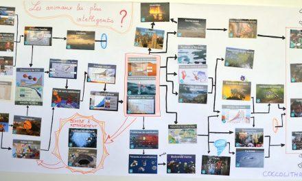 Résultats du concours de la Fresque du Climat